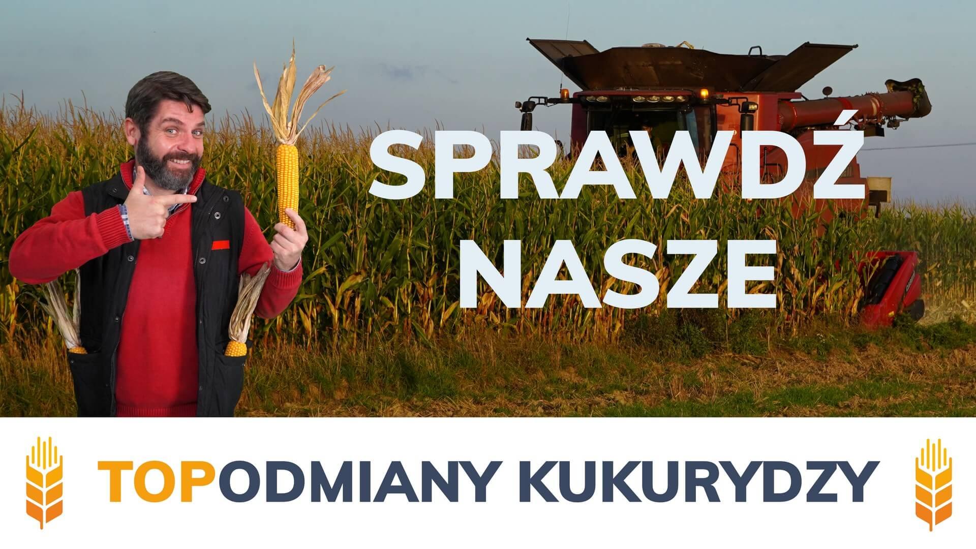 Kukurydza - sprwadź nasze top odmiany